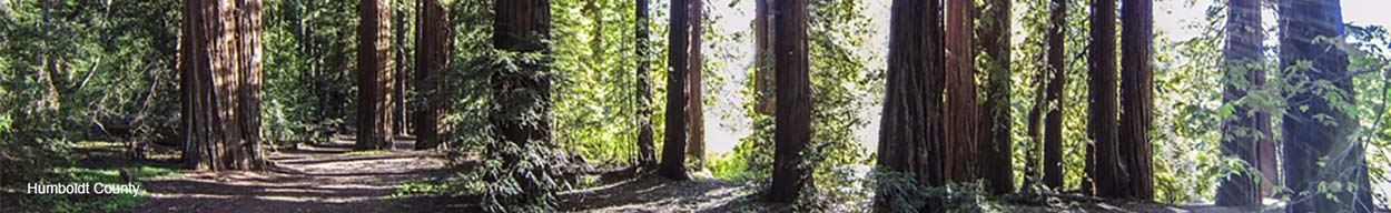 Banner Image of Humboldt County Forest