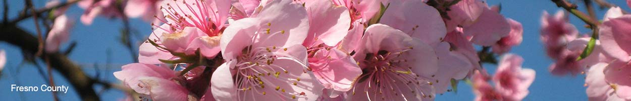 Banner Image of Fresno County Blossoms