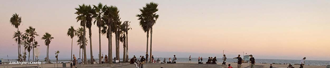 Banner image of Los Angeles Palm Trees