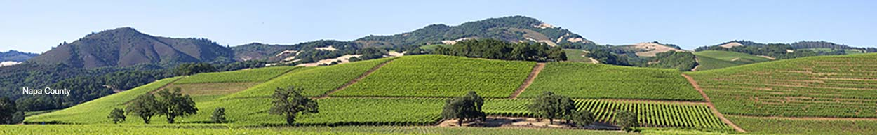 Landscape Image of vineyards with text stating
