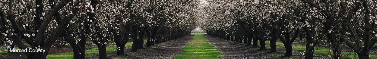Banner Image of Merced County Orchards.